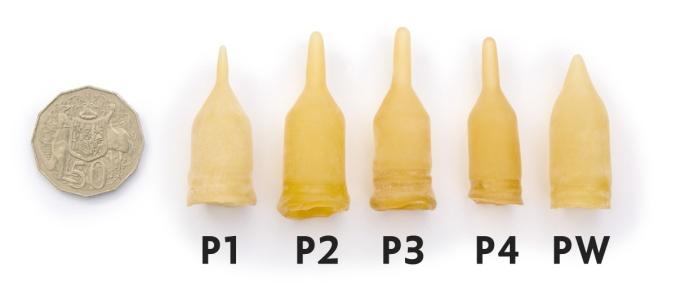 Possum-P1-P2-P3-P4-PW